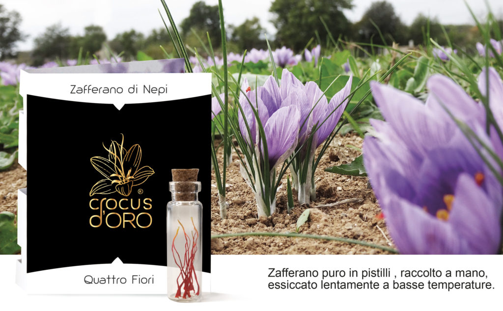 crocus d'oro, saffron threads, crocus card, italian saffron